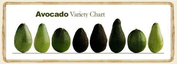 II▻★★★ Variedades de aguacate. Características de las diferentes variedades y cultivares más extendidos en España. Clasificación según características del fruto.