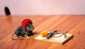 How to get rid of mice - Keep Mice Out Forever   Mice Control Tips