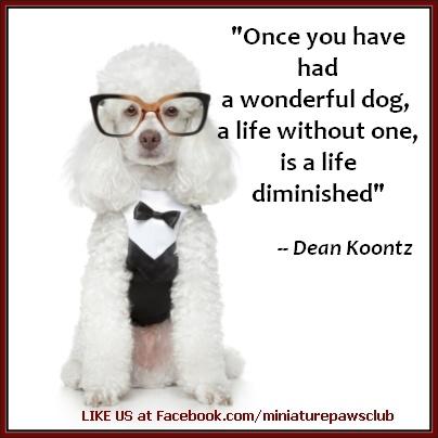 Τι είναι η ζωή χωρίς σκύλο;