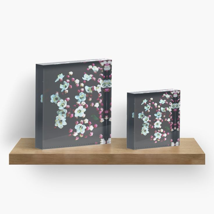 Viburnum Flowers Acrylic Blocks by ARTbyJWP via Redbubble #acrylicblocks #walldeco #artprints #floral #artbyjwp --   Close-up of beautiful viburnum flowers on a dark background. • Also buy this artwork on home decor, apparel, stickers, and more.