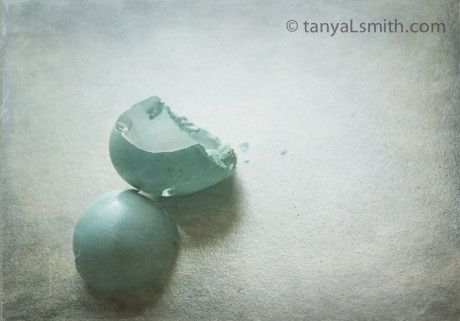 fine art Photography. robins eggs. turquoise.