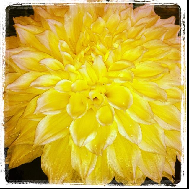 Flower from my dads garden