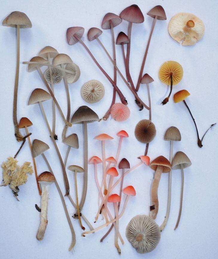 ~: Fungi, Stuff, Nature, Posts, Multicolored Mushrooms, Things, Collection, Garden Nicswk