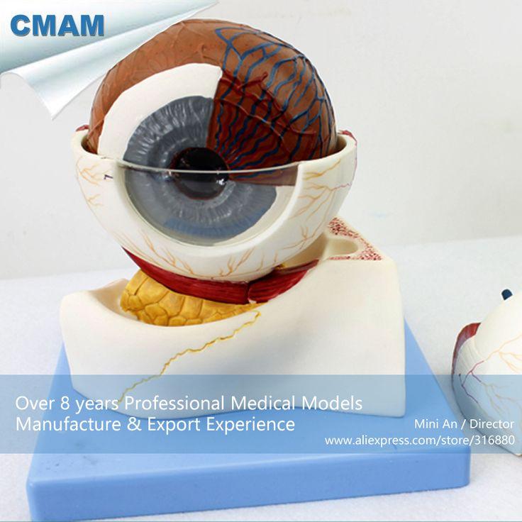 CMAM-EYE05 Horizontal Plane Section Human Eyeball Anatomy Model, Medical Science Educational Teaching Anatomical Models