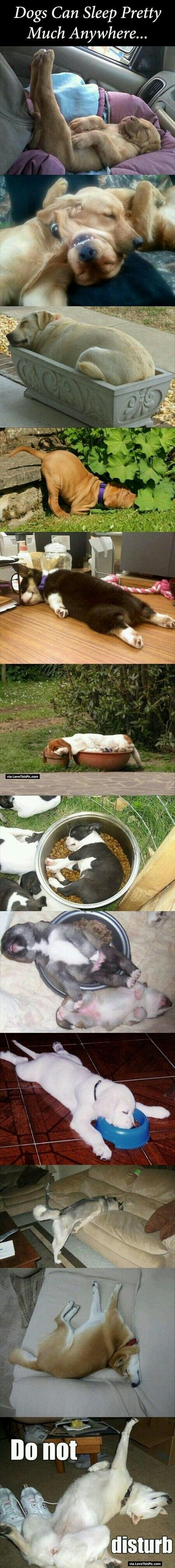 Digs Can Sleep Anywhere cute animals dogs adorable dog puppy animal pets funny animals funny pets funny dogs funny dog images