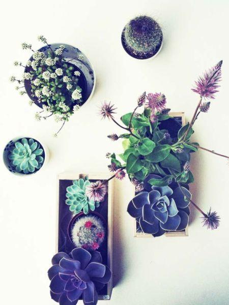 Fazer minijardins para dentro de casa é mais fácil do que você imagina (Foto: woohome.com)