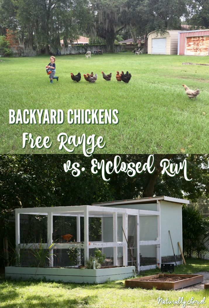 Backyard Chickens: Free Range Vs. Enclosed Run