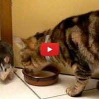 http://www.interestingfunfacts.com/this-video-puts-the-cat-vs-rat-theory-on-its-head-lol.html This Video Puts The Cat Vs Rat Theory On Its Head! Lol…