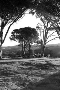 We sat among The Five Soldiers, 5 old trees at the top of a big hill overlooking Rustenberg's vineyards.  We just sipped wine until the sun set, beautiful.