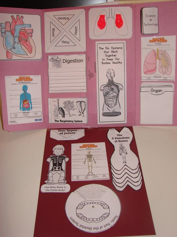Lapbook Human Body Ideas!