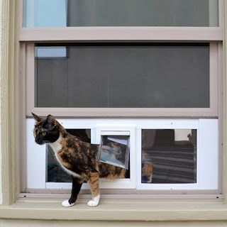 """Proper cat care is important to keep in mind when looking for cool cat stuff or when assembling items for your next diy pet project. As cat products go this window mounted cat door is really """"spiffy"""".Now the only question is to go out... or in... or out... or in...?"""