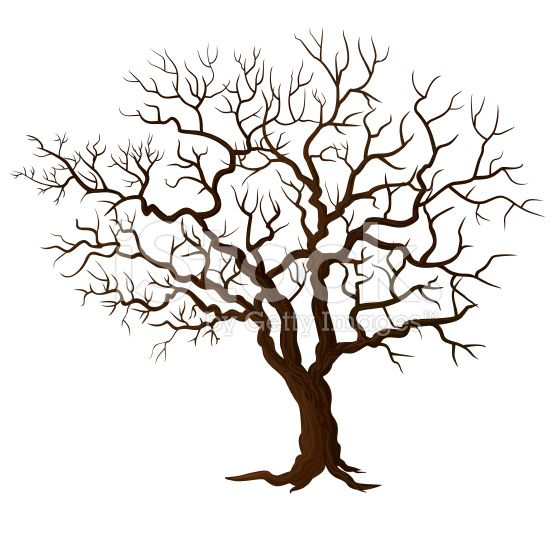 Tree Without Leaves Isolated On White Background Tree