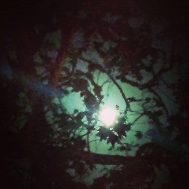 No rain headed here/yet the full Thunder Moon still/shines through bone-dry oaks. #californiadrought #thundermoon #nativetrees #lagunabeach #climateaction #thirsty #haiku