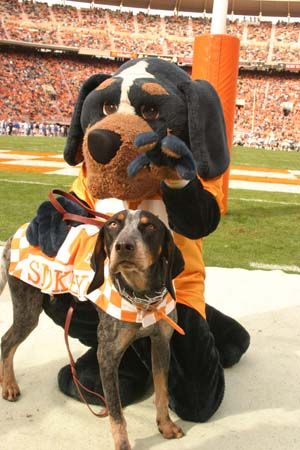 """""""Smokey"""" the mascots of the Tennessee Volunteers (Vols) - Knoxville, TN"""
