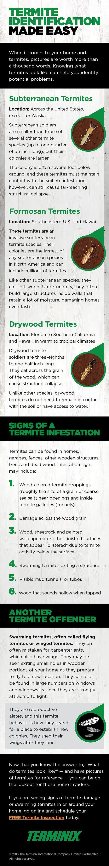 How to identify termite types ? #termitecontrol