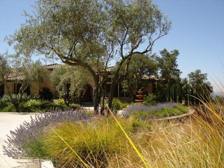 Plant selection for your Mediterranean garden.