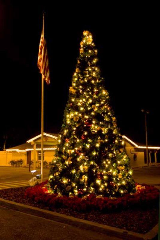 56 best OUTDOOR TREE LIGHTING images on Pinterest   Outdoor tree ...
