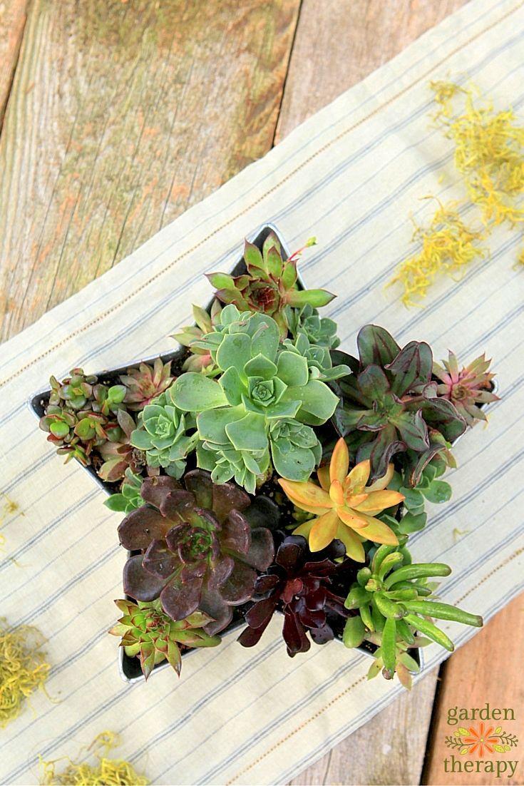 Unique diy home garden decor with a shoe planter and succulents - Shooting Star Succulent Planter
