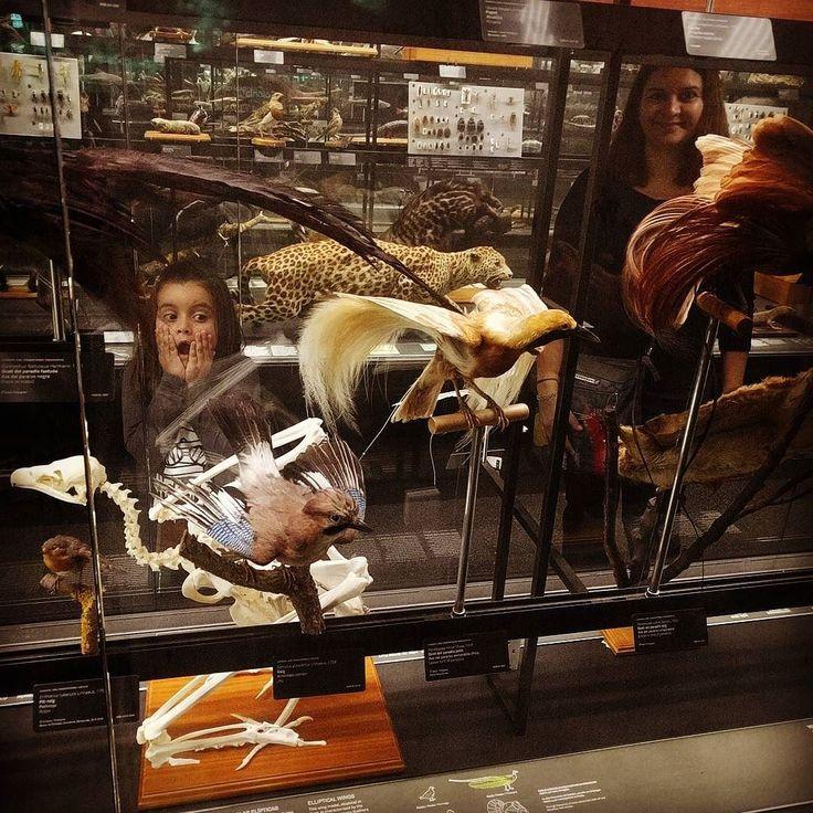 #animales #disecados en el #museublau de #barcelona ... Aprovechando el #diadepuertasabiertas en el #museo de #ciencias #naturales de #bcn ... #lamerce2016 #cienciasnaturales #museums #museu #museos