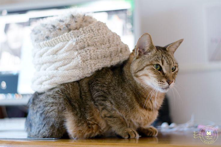 Snood + Cat = Snail Σ:3