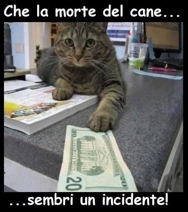 Che la Morte del Cane Sembri un Incidente Gattino Cattivo