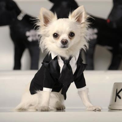All dressed up !!! ♥ Yuppypup.co.uk provides the fashion conscious with stylish clothes for their dogs. Luxury dog clothes and latest season trends, Dog Carriers and Doggy Bling. Next Day Delivery. Please go to http://www.yuppypup.co.uk/