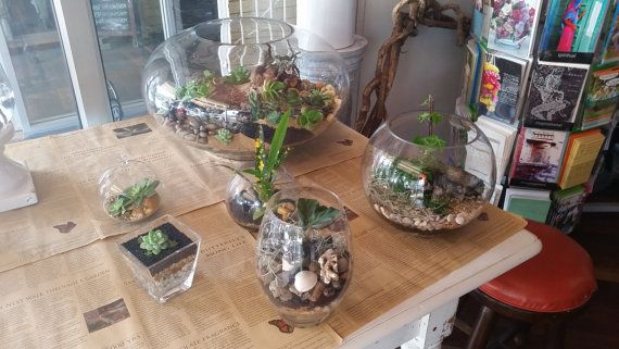 Glass Terrarium orbs different shapes and sizes. by Greenliven