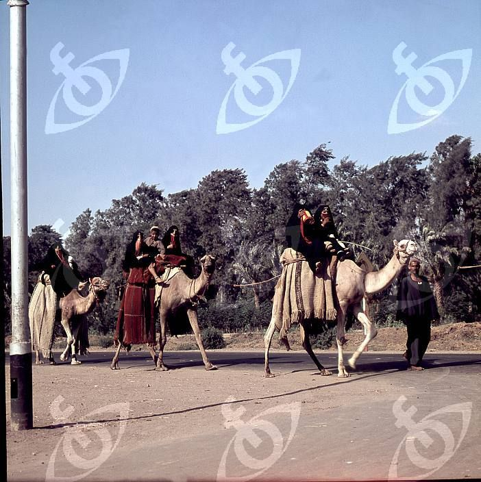 Camel convoy with bedouin ladies passing by on the Saqqara road. Country of Origin: Egypt. Date/Period: 1958-59 Place of Origin: Harrania. Credit Line: Werner Forman Archive/ Ramses Wissa Wassef Art Centre.