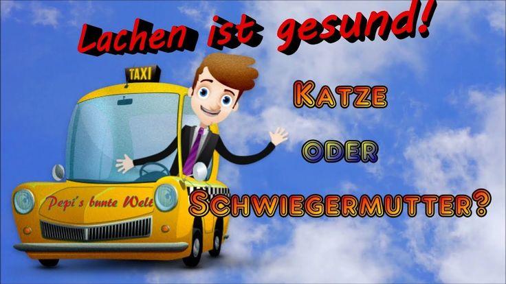 Lachen ist gesund❗😂Katze oder Schwiegermutter❓Im Taxi herrschte Totensti...