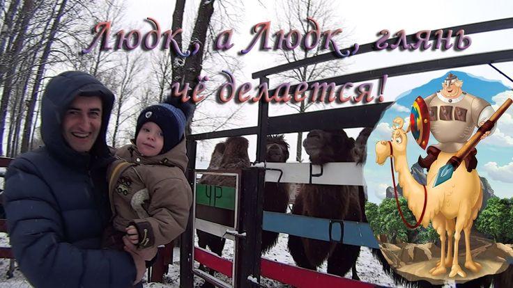 Прикольное видео Мультфильм Верблюды, медведь, волк, ослики, страус. д.А...