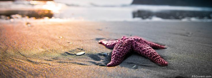 Starfish On Beach Facebook Covers