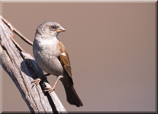 The bird life on Midstream . For more information visit www.midrand-estates.co.za