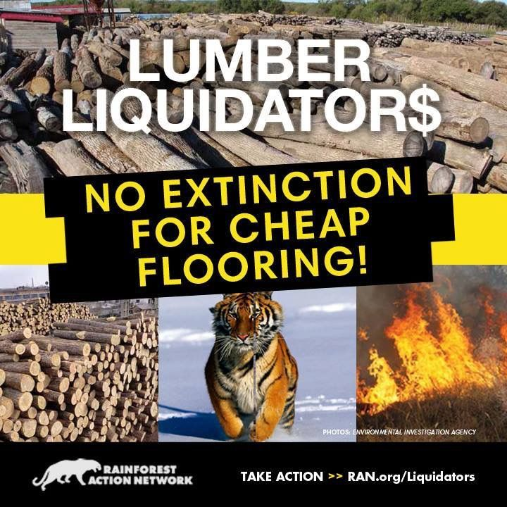 In 2014, thousands of RAN activists expressed outrage at Lumber Liquidator's ties to illegal logging and destruction of the last habitat of the Siberian Tiger.