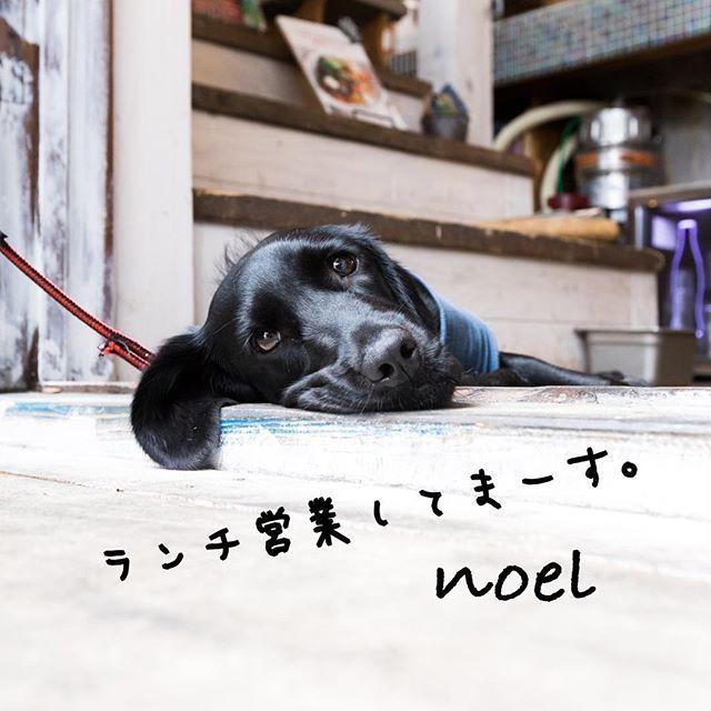 今日、ランチ営業してます。 ぜひ、来てくださーい! . #辻堂#湘南#サーファー通り#辻堂海浜公園#ランチ#ディナー#カフェ#パスタ#生麺#肉料理#アイスクリーム#犬#犬OK#テラス#オシャレ#オシャレなお店#海#海近く#愛犬#看板犬#ノエル#黒ラブラドール#ワークショップ#ヨガ#ヨガスタジオ#ライブ#スタッフ募集