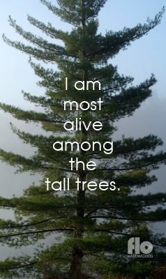 I am most alive among the tall trees. #FLOhardwoods