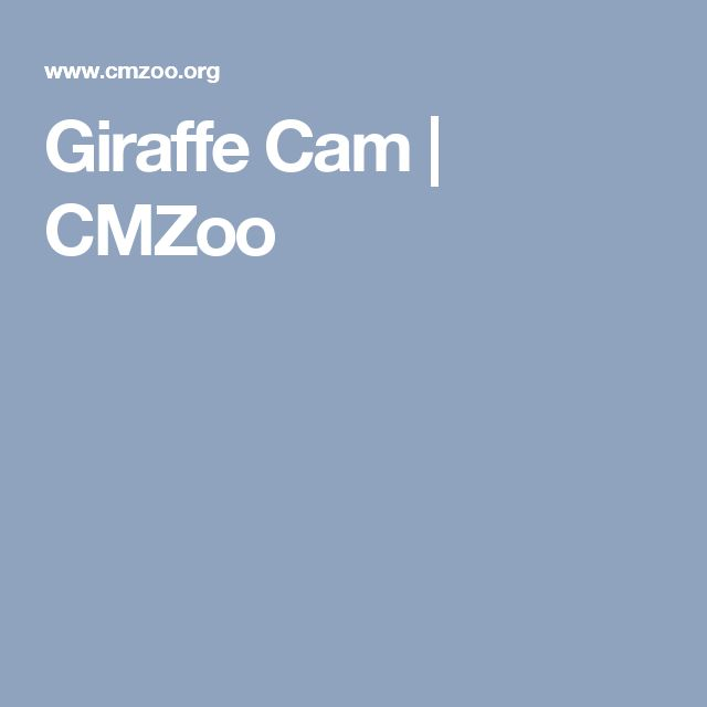 Giraffe Cam | CMZoo
