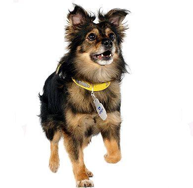 Mascotas: 1 Perro Quiltro muy simpatico
