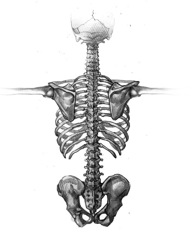 109 best Anatomical illustrations images on Pinterest