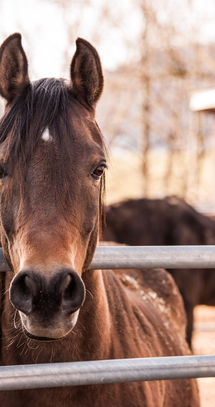 Please step up and tell the BLM, Senators, and President Trump that the treatment of OUR wild horses and burros is totally unacceptable!! It has to stop!