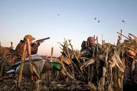 Minimalist Waterfowler: How to Take More Ducks and Geese With Less Gear   Outdoor Life