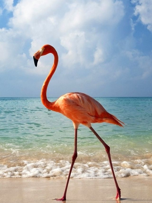 Flamingo 94 best Flamingos images on Pinterest
