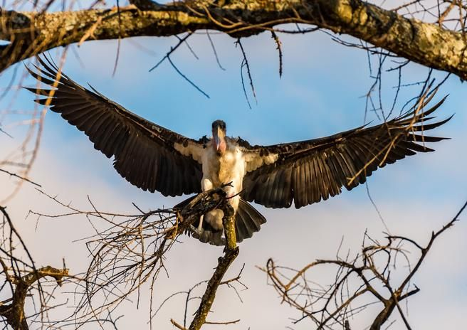 Check out the photo I entered in 'Things with wings'. Enter free #photography #contests @photocrowd