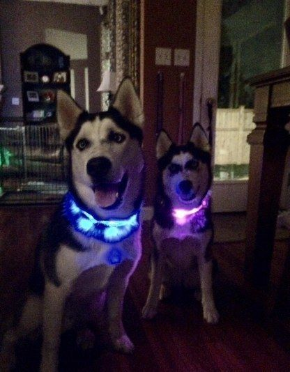 "This <a href=""http://amzn.to/1XyRfwX"" target=""_blank"">LED dog collar</a> ($17 to $21) helps your pup stay visible at night."