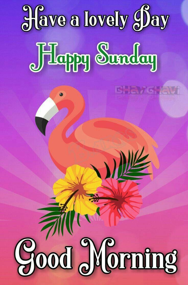 Pin By Radhika Radhika On Arts Good Morning Quotes Sunday