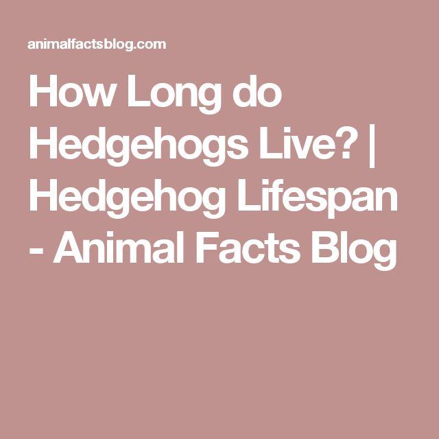 How Long do Hedgehogs Live? | Hedgehog Lifespan - Animal Facts Blog