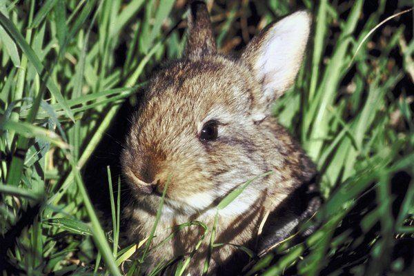 Easy Fence To Keep Bunnies Out In 2020 Rabbit Repellent Wild Rabbit Rabbit Garden