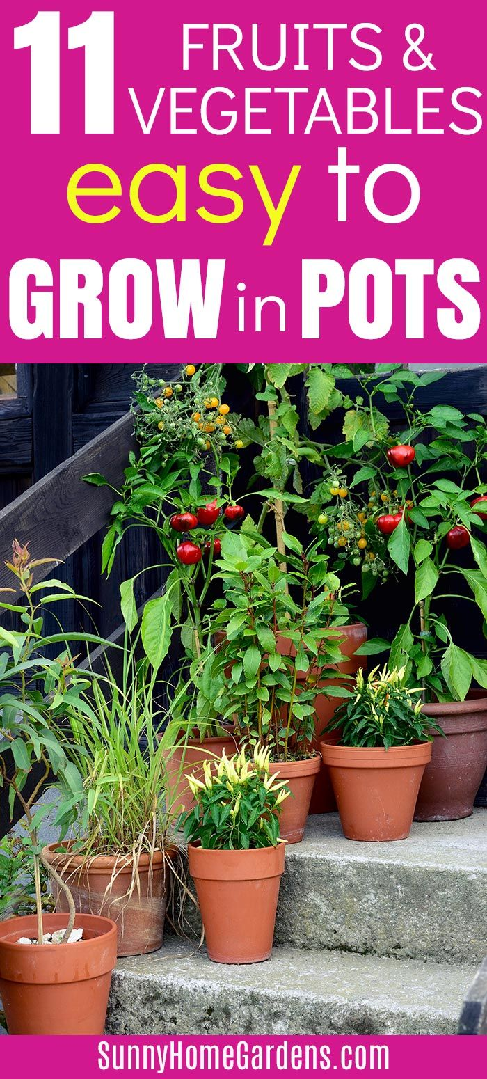 11 Easy Fruits And Vegetables To Grow In Pots Growing Vegetables Container Vegetables Vegetable Garden For Beginners