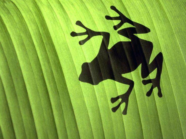 bakgrunnsbilder til mobilen - Frosker: http://wallpapic-no.com/dyr/frosker/wallpaper-22743