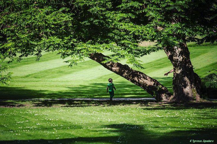 #daylight #naturallight #instagood #bestoftheday #globe_captures #follow4follow #centofoto #instagood#instadaily #instamood #ig_global_life #ig_italy #ig_italia #igersitalia #igfriends_italy#gf_italy #ig_slovenia #arboretum #kids #green