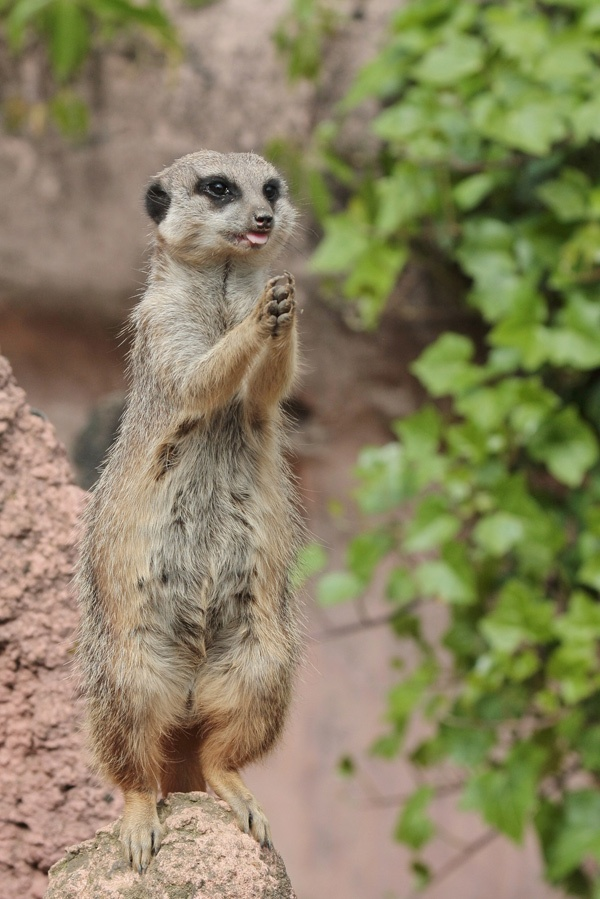 """""""And thank you that I am a meerkat. Amen."""""""